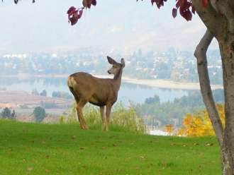 hospitality inn kamloops deer on lawn